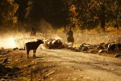 Kazakh herdsman stock photography