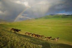 Kazakh horse Royalty Free Stock Image