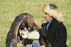 Kazakh hunter feeds golden eagle Aquila chrysaetos, Almaty, Kazakhstan. Royalty Free Stock Images