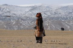Kazakh Mongolian man dressed with traditional outfit training the golden eagle to catch a fox pray stock photo