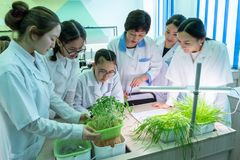 2019-09-01, Kazakhstan, Kostanay. Hydroponics. School. Growing green plants in water without land. Asian girls and teacher in royalty free stock photos