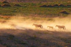 Kazakhstan.Steppe. Caravan of horses. Stock Photography