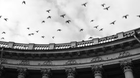 Kazan cathedral and flying birds Royalty Free Stock Images