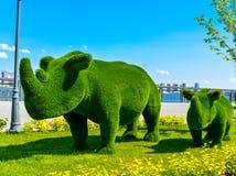 Kazan, Rusia rhinos Figura del Topiary en el terraplén del Kremlin del río Kazanka Diseño del paisaje Arte verde Fotos de archivo libres de regalías
