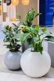 Kazan/Russia - 10 maggio 2019: Vasi interessanti ed insoliti per le piante con le forme arrotondate fotografia stock libera da diritti
