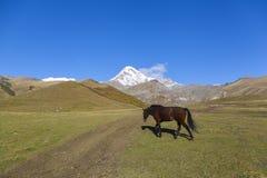 Kazbegi-Pferd Lizenzfreie Stockfotografie