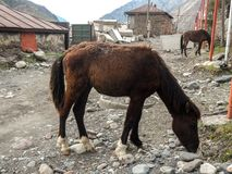 Kazbek山,高加索,乔治亚,欧洲 库存图片