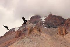 Kazbek Mount (Georgia). Mount Kazbek (Mkinvartsveri), is a dormant stratovolcano and one of the major mountains of the Caucasus located in the Kazbegi District royalty free stock images