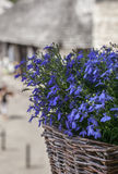 Kazimierz Dolny, Poland - blue flowers in a basket. Stock Photo