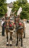 Kazimierz Dolny, Poland - horses at a wedding. Royalty Free Stock Photography