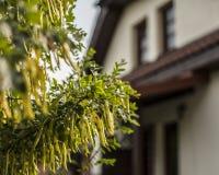 Kazimierz Dolny Polen - ett hus i ett avstånd Royaltyfria Bilder