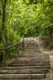 Kazimierz Dolny, Polonia - pasos en el bosque Foto de archivo