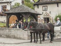 Kazimierz Dolny, Polonia - una via nella città/cavalli Immagini Stock Libere da Diritti