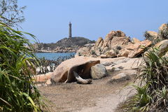 Ke Ga海滩在越南 库存照片
