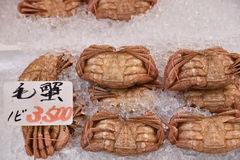 KE-gani (cangrejo del crin) se enfría en el hielo para la venta en el mornin de Hakodate Foto de archivo libre de regalías