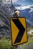 Kea Parrot Road Sign. A Kea on a road sign near Milford Sound New Zealand royalty free stock photo