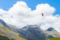 Kea que voa sobre a montanha Fotografia de Stock