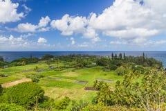 Keanae em Maui com campos do Taro imagens de stock