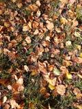 Keaves древесины осени Стоковое Фото