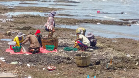 Keb beach sea clams farmer. Keb city cambodia kingdom of cambodia Stock Photography