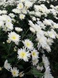 Kebun bunga. Explore kebun bunga bandungan indonesia Royalty Free Stock Images