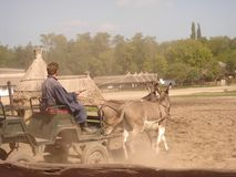 Kecskemét, Bà ¡ cs okręg administracyjny, Węgry: Wielka Prosta Puszta wycieczka turysyczna z tradycyjnym końskim przedstawieniem zdjęcie stock