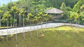 KEDAH, LANGKAWI, MALASIA - 9 de abril de 2015: Visión desde arriba de la montaña de Gunung Raya foto de archivo