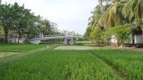 KEDAH, LANGKAWI, MALASIA - 8 de abril de 2015: Vista escénica de los campos de arroz de arroz con las palmeras en una granja del  imagen de archivo libre de regalías