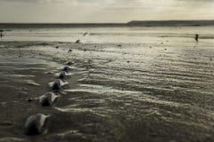 Kedja inbäddad i våt sand på stranden på lågvatten Arkivbild