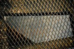 Kedja det rostiga staket Royaltyfria Foton