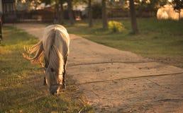 Kedjad fast häst på lantgården Royaltyfri Bild