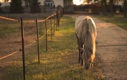 Kedjad fast häst på lantgården Royaltyfri Foto