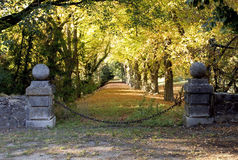Kedjad fast nyckel som leder till avenyn av kastanjebruna träd för häst Royaltyfri Bild