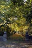 Kedjad fast nyckel som leder till avenyn av kastanjebruna träd för häst Royaltyfria Bilder