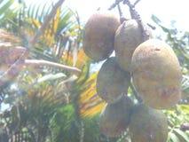 Kedondong fruits Royalty Free Stock Photography