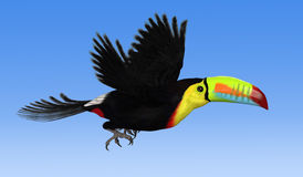 Keel Biled Toucan Flying. A Keel Billed Toucan flying against a blue sky - 3d render Stock Photography