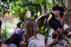 Keel billed toucan - ramphastos sulfuratus Stock Photo