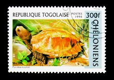 Keeled龟盒(Pyxidea mouhoti),乌龟serie,大约1996年 图库摄影