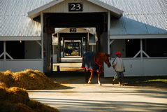 Keeneland Race Track Stables. A trainer leads a racehorse from the stable before a race at Keeneland Race Track in Lexington, Kentucky stock photography