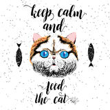 Keep calm and feed the cat. Sign with cute smiling cat. Motivational lettering on texture background. Inscriptions for pet lovers. Inspirational typographic Stock Photography