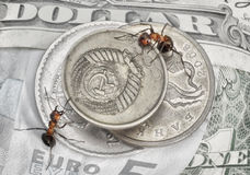 Keep a change, ants and money coins Stock Image