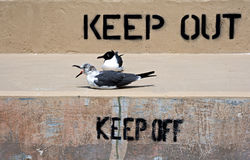 Keep Out and Keep Off sign on a seawall with seagulls Royalty Free Stock Photos