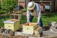 Keeping the Bees. A beekeeper installs a new package of bees in a hive Royalty Free Stock Photo