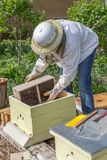 Keeping the Bees. A beekeeper installs a new package of bees in a hive Royalty Free Stock Image