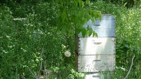 Keeping Bees. On this Summer day the bee keeper has a place for the hive to safely stay Stock Image
