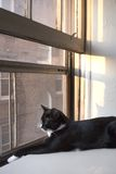 Keeping an Eye on Things. A black cat stretches out on a large windowsill in the late afternoon sun, keeping an eye on the street life below Stock Images