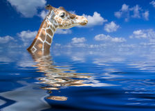 Keeping His Head Above Water Royalty Free Stock Image