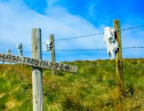 Keeping out the trespassers on a fence line. Skulls on post, Vulcan County, Alberta, Canada Royalty Free Stock Images