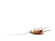 Keer kakkerlak om isoleren op witte achtergrond Royalty-vrije Stock Afbeelding