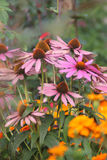 Kegel-Blumen im Garten Lizenzfreies Stockfoto